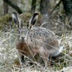 Охота на зайца в ноябре